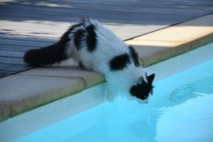 Cat by the swimming pool